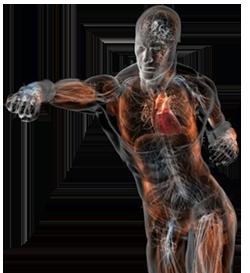 punching-anatomy