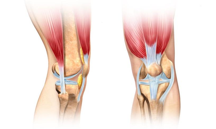 patellar-tracking-disorder-human-knee