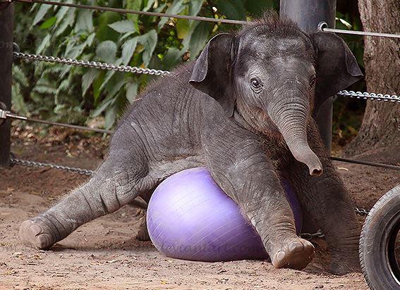 clumsy-elephant